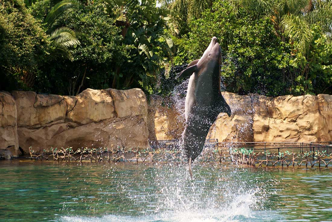 06dolphin-jumping-from-water-at-discovery-cove